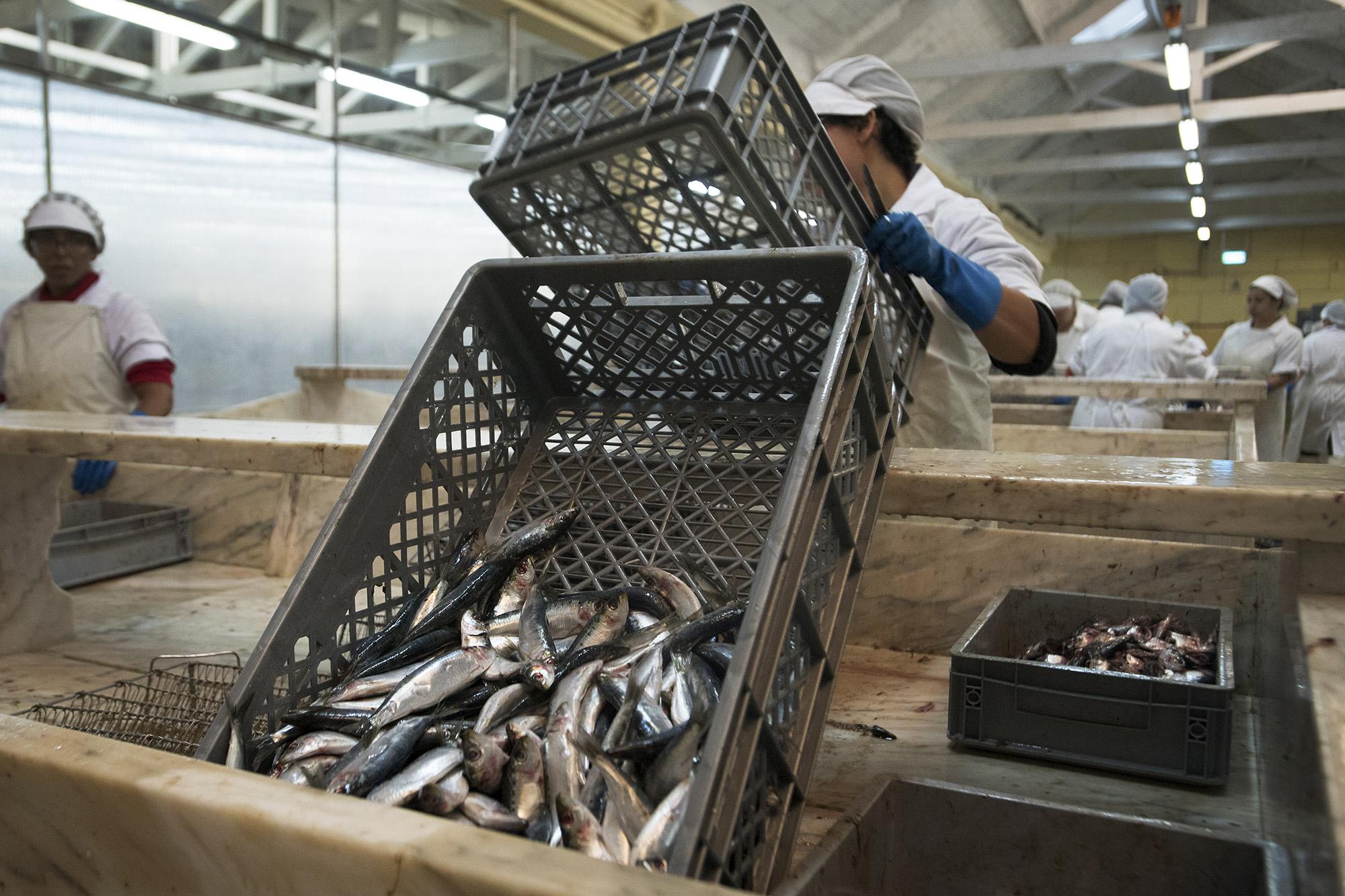 Reportagem na fábrica de conservas Pinhais em Matosinhos - 21OUT20