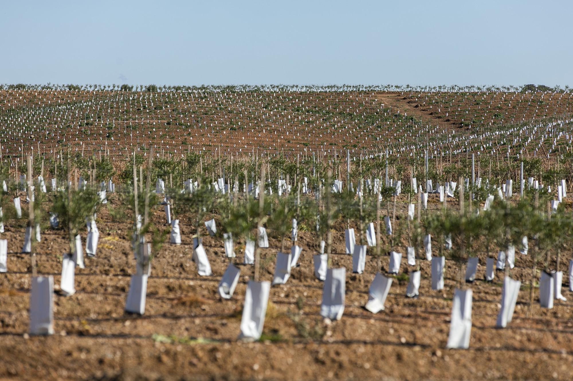 Reportagem olivicultura no Alentejo - 29OUT20
